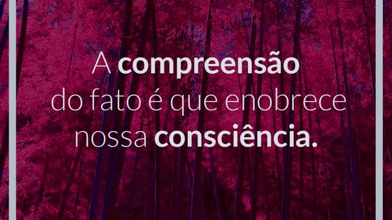 A compreensão do fato é que enobrece nossa consciência.